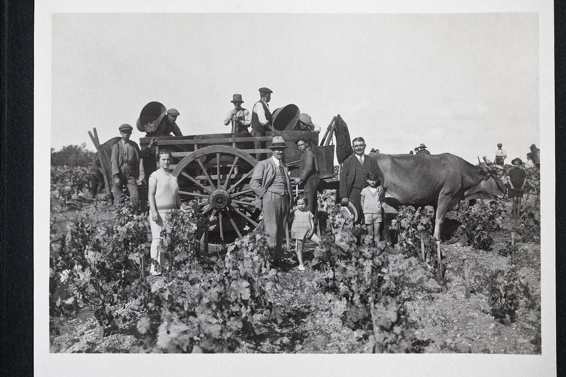 Harvest 1928 in the Pauillac vines - Marcel and Francis Borie